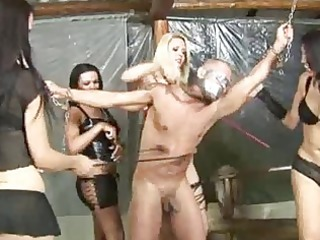 5 shemale dommes 1 poor boy!